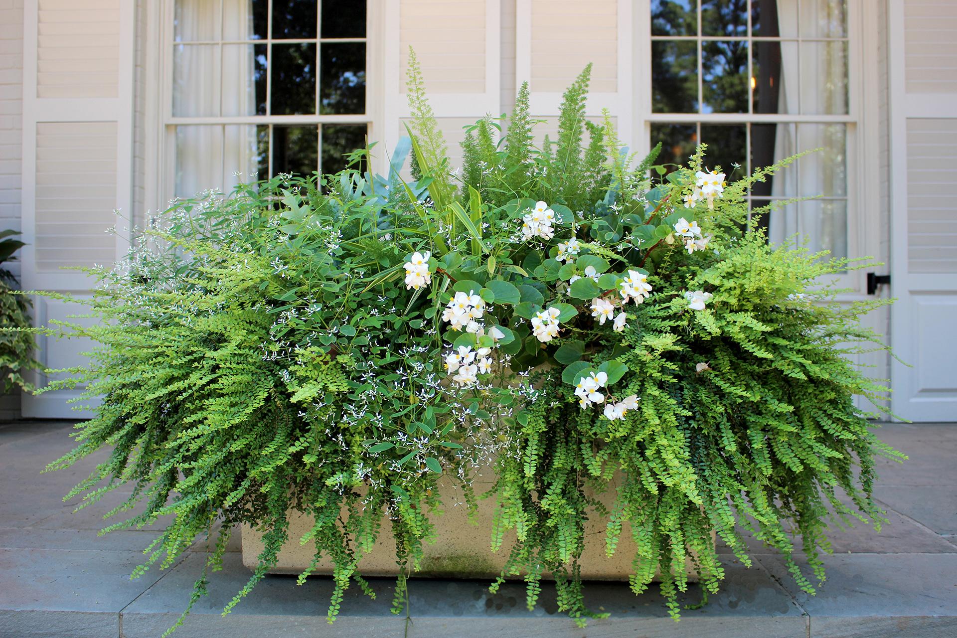 home_floralis_seasonal_2014_80