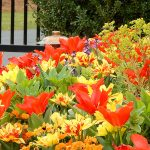 Bold, bright flower beds